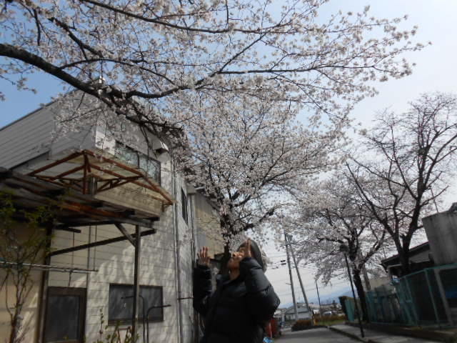 4月お花見 全景 ③