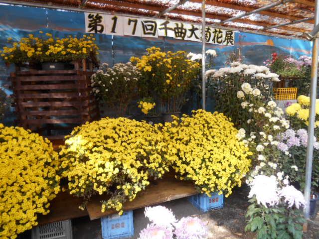 11月 菊花展 表紙